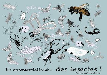 insectes-celles-qui-osent