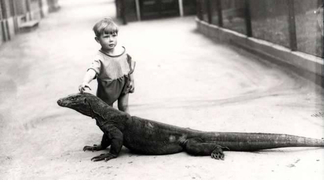 enfant-avec-dragon-komodo-au-zoo-de-londres